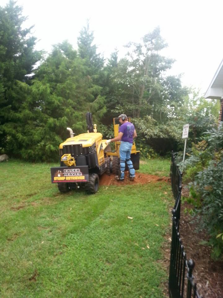 tree services Lynchburg VA